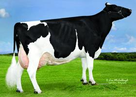 sROXY Knaus_Dairy_Roxy_340
